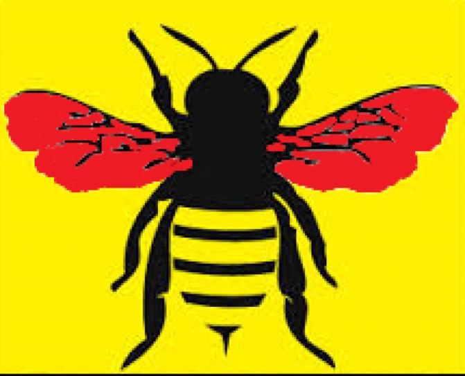 Why I started BeeOrdiway